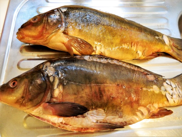 Best Fish Soup Recipe-Two Carp Fishes