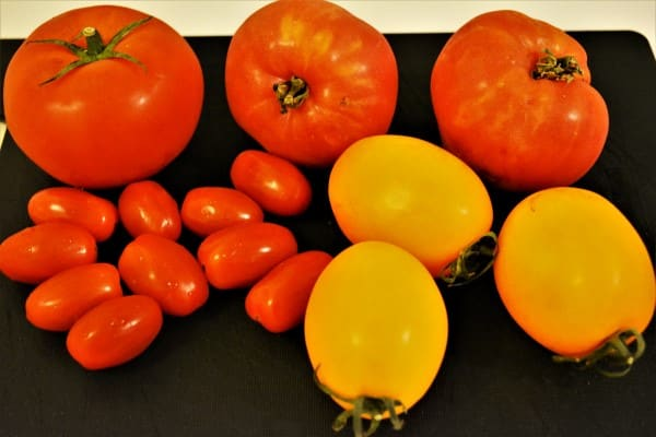 Tomatoes Caprese Salad Recipe-Different Tips of Tomatoes